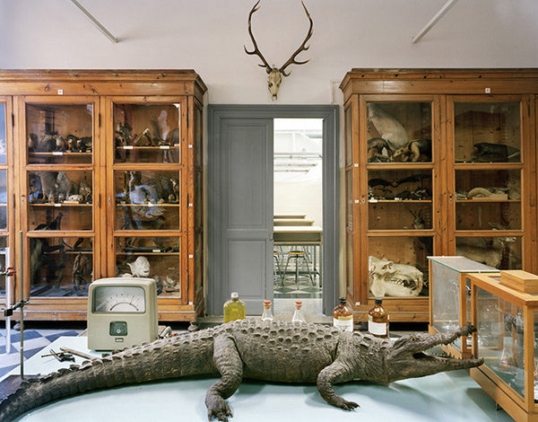 Richard Barnes - Tasso Alligator Rome, Chromogenic Print Mounted to Archival Substrate, Framed in White with Plexiglass,  - Bau-Xi Gallery