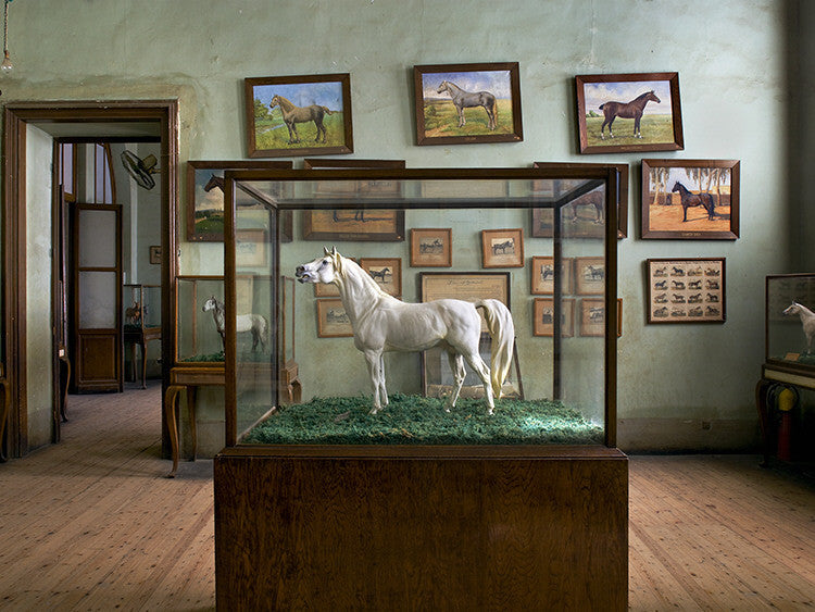 Richard Barnes - Horse & Horse Paintings, Cairo - available in 3 sizes, Chromogenic Print Mounted to Archival Substrate, Framed in White with Plexiglass,  - Bau-Xi Gallery