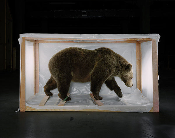 Richard Barnes - Smithsonian Bear from Animal Logic, Chromogenic Print Mounted to Archival Substrate, Framed in White with Plexiglass,  - Bau-Xi Gallery