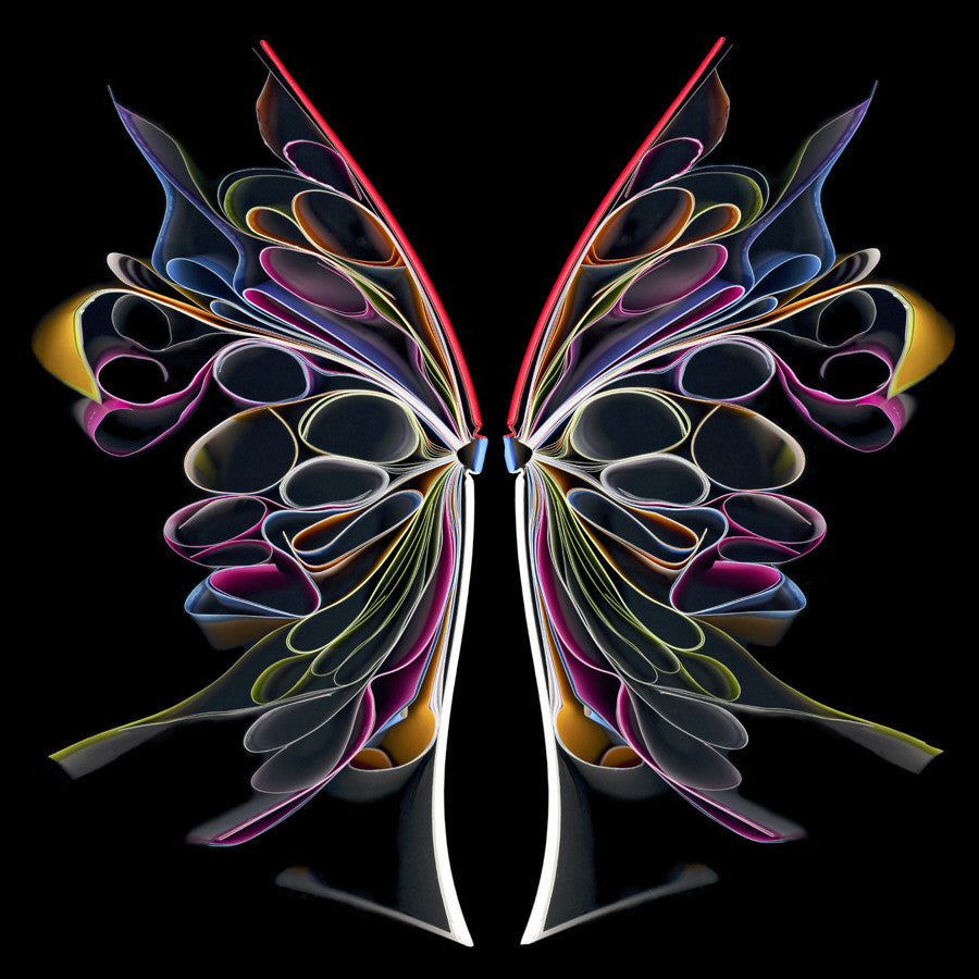 Cara Barer - Butterfly II - 24x24 in., Archival Pigment Print Mounted on Archival Substrate, Framed in Black with Plexiglass,  - Bau-Xi Gallery