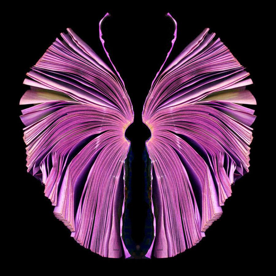 Cara Barer - Pink Butterfly, Archival Pigment Print Mounted on Archival Substrate, Framed in Black with Plexiglass,  - Bau-Xi Gallery
