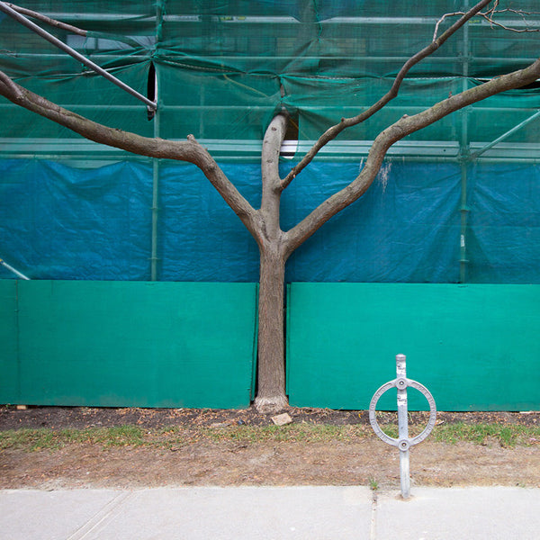 Chris Shepherd - Hoarding & Tree, West Elm East off Jefferson - 36x36 in. - $3,100, Chromogenic Print Mounted to Archival Substrate, Framed in White with Glass,  - Bau-Xi Gallery