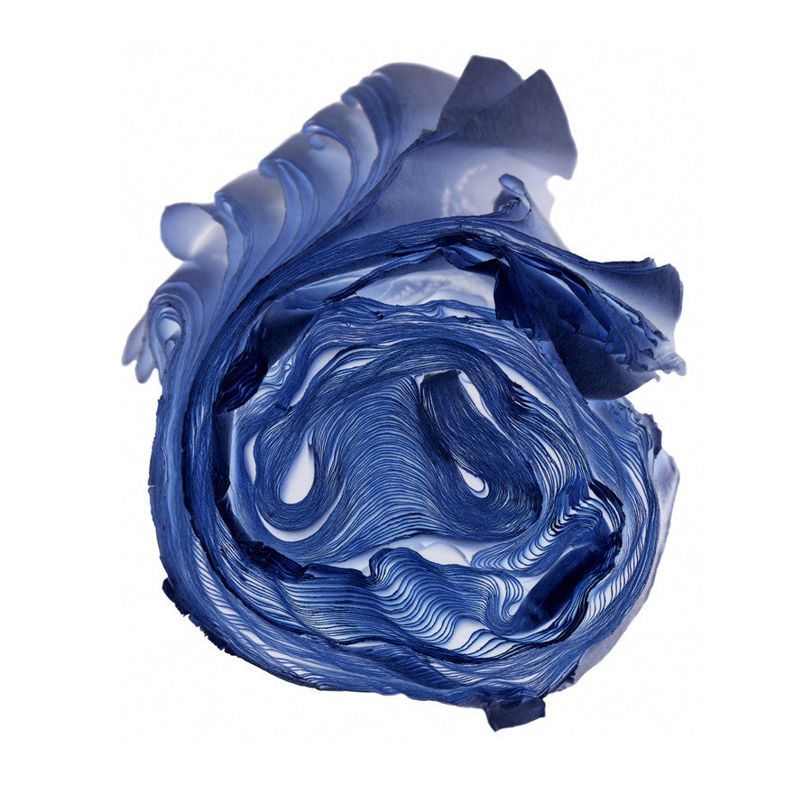 Cara Barer - Blue Rose, Archival Pigment Print Mounted on Archival Substrate, Framed in White with Plexiglass,  - Bau-Xi Gallery