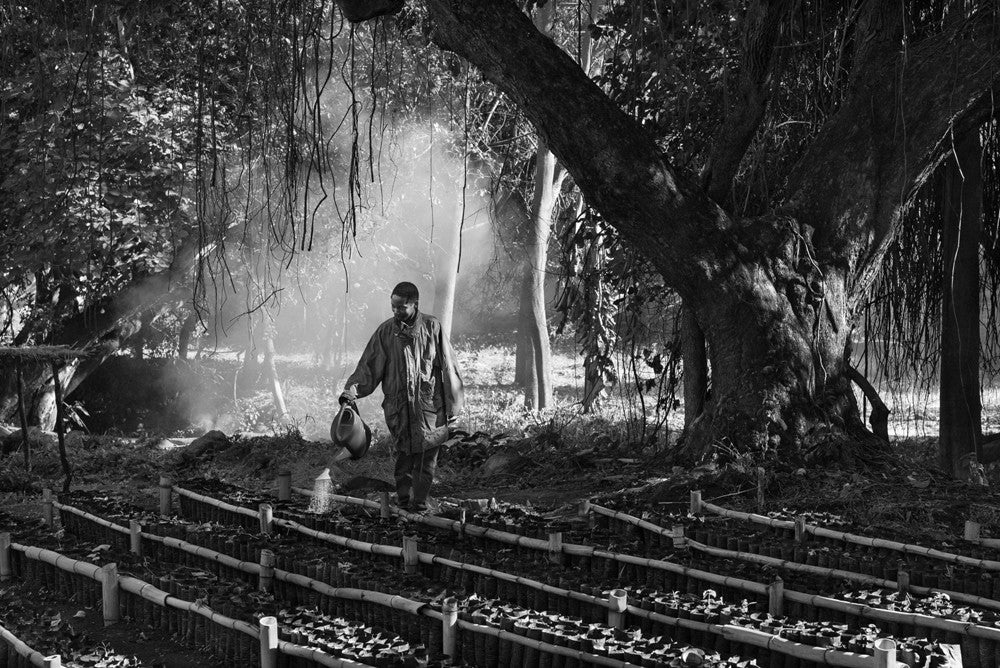 Jakob de Boer - Watering the Seedlings, Selenium toned, silver gelatin print, unframed,  - Bau-Xi Gallery