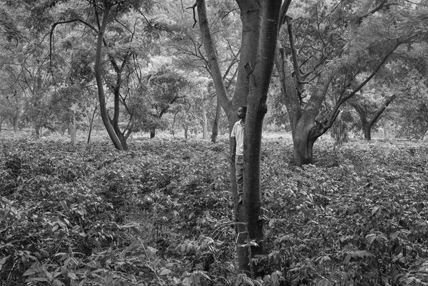 Jakob de Boer - Watching Over the Coffee Fields, Selenium toned, silver gelatin print, unframed,  - Bau-Xi Gallery