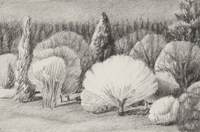 Drew Burnham - Lynn Valley Lit-drawing, Graphite on Paper, Framed in Black with Glass,  - Bau-Xi Gallery