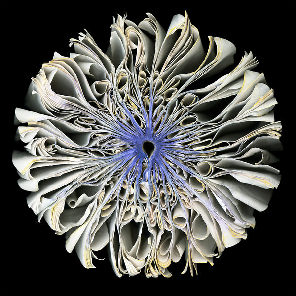 Cara Barer - Iris - available in 3 sizes, Archival Pigment Print Mounted on Archival Substrate, Framed in Black with Plexiglass,  - Bau-Xi Gallery