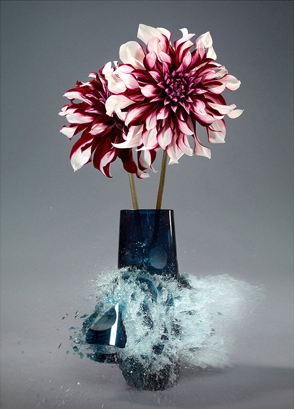 Martin Klimas - Untitled (Dahlia II) - 30x24 in. - $4,850, Archival Inkjet Print Mounted on Archival Substrate, Framed in White with UV anti-reflective glass,  - Bau-Xi Gallery