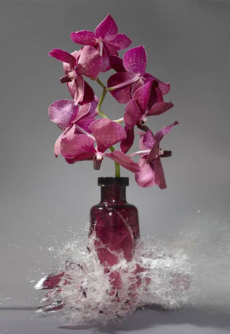 Untitled (Vanda) - 2 sizes - $12,850-$22,500