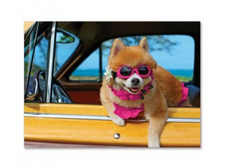 "Greeting Card ""Beach Cruisin'"""