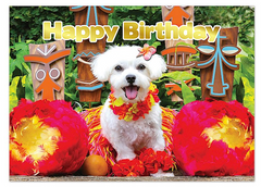 "Greeting Card ""Party Pup"""