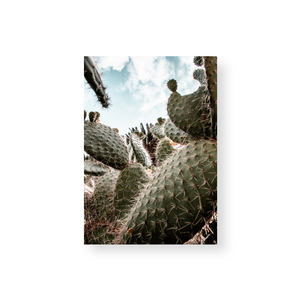 Commercial License Cactus