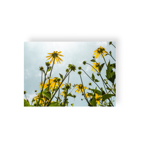 Commercial License Yellow Flowers