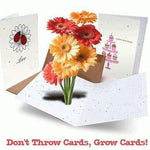 Cherry Blossom Landscape Plantable Greeting Cards - 4 Pack - Fine Gifts La Bella Basket Company