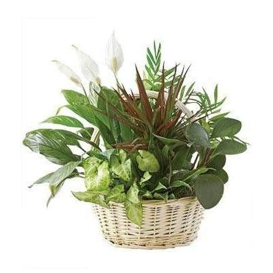 Mixed Greens Dish Flower Plant Garden - Fine Gifts La Bella Basket Company