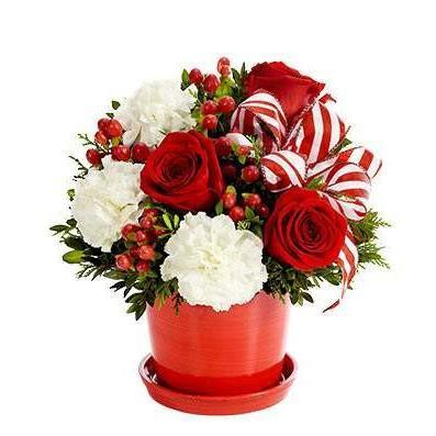 Peppermint Holiday Surprise Planter Bouquet - Fine Gifts La Bella Basket Company