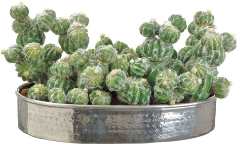 Lifelike Ladyfinger Cactus Garden - Innovations Designer Home Decor