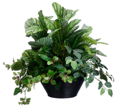 Lifelike Peperomia & Fittonia Greenery Arrangement - Innovations Designer Home Decor