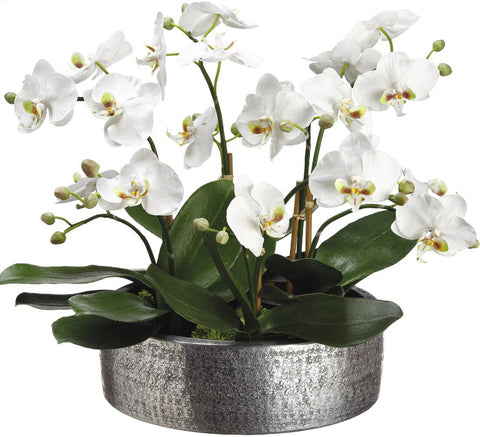 Lifelike White Phalaenopsis Orchid Plant - Innovations Designer Home Decor