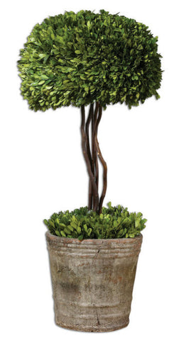 Tree Topiary Preserved Boxwood - Innovations Designer Home Decor