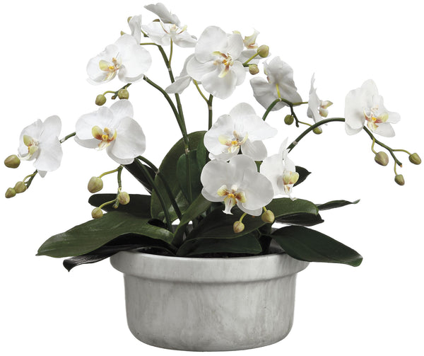 Lifelike Small White Phalaenopsis Orchid Plant In Decorative Container