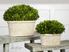 Oval Domes Preserved Boxwood Set/2 by Uttermost