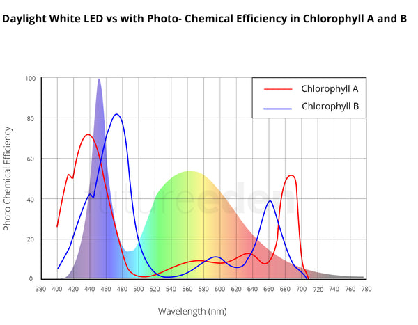 Home made LED Grow light graph against peaks in Chlorophyll A and B