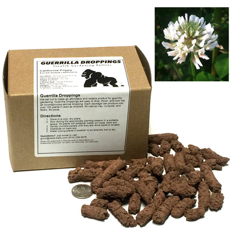 Dutch White Clover Guerrilla Droppings (Trifolium repens) - Seed-Balls.com  - 1