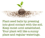 Cabbage Seed Balls (Red Acre) - Seed-Balls.com  - 4