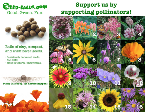 Wildflower Seed Ball Fundraiser Kit - Seed-Balls.com  - 1
