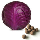 Cabbage Seed Balls (Red Acre) - Seed-Balls.com  - 1