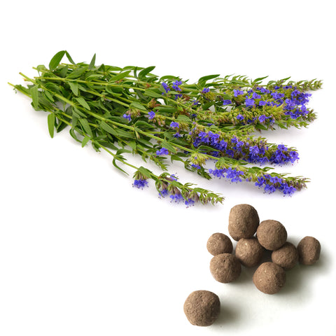 Anise Hyssop Seed balls