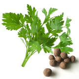 Parsley Seed Balls - Seed-Balls.com  - 1