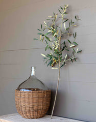 Tuscan Olive Branch