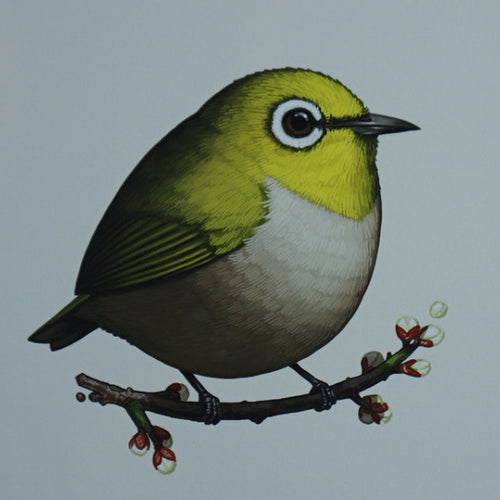 Fat Bird - 2016 Mike Mitchell Japanese White-eye poster/print AP
