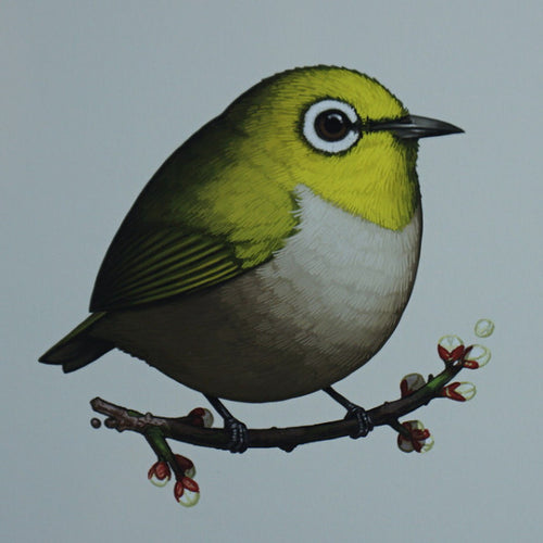 Fat Bird - 2016 Mike Mitchell Japanese White-eye poster/print