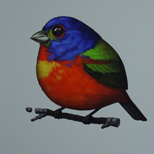 Fat Bird - 2016 Mike Mitchell Painted Bunting poster/print AP