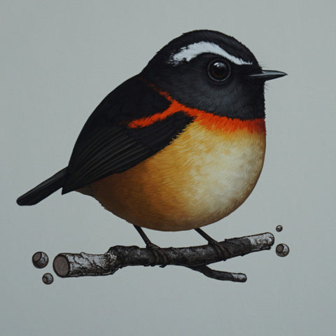 Fat Bird - 2016 Mike Mitchell Collared Bush Robin poster/print AP