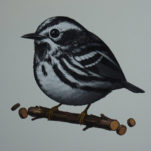 Fat Bird - 2016 Mike Mitchell Warbler Black and White AP poster/print