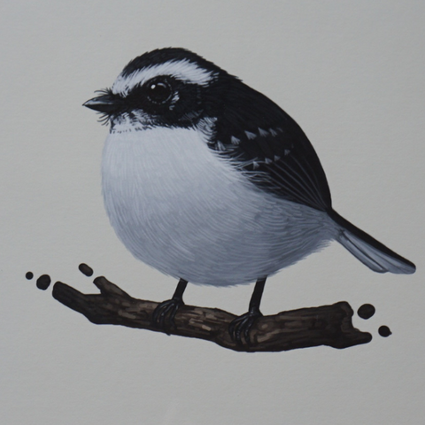 Fat Bird - 2014 Mike Mitchell White-browed Fantail poster/print
