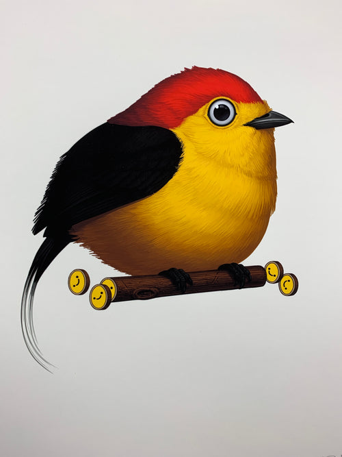 Fat Bird - 2019 Mike Mitchell Wire-tailed Manakin poster print