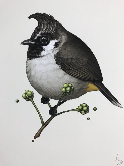 Himalayan Bulbul - 2017 Mike Mitchell poster Fat Birds print