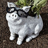 Roman - Pig With Glasses Planter – Garden – 10093