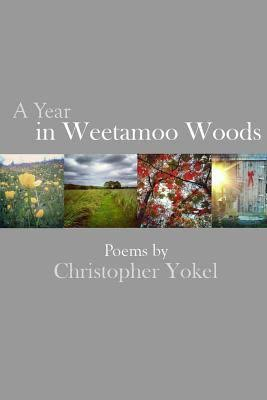 A Year in Weetamoo Woods