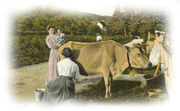 women milking a Jersey cow