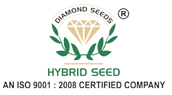 Diamond Seeds