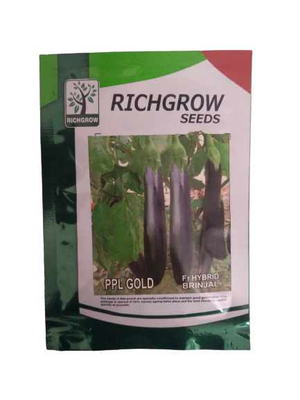PPL Gold Hybrid Brinjal Small Pack (RichGrow Seeds)