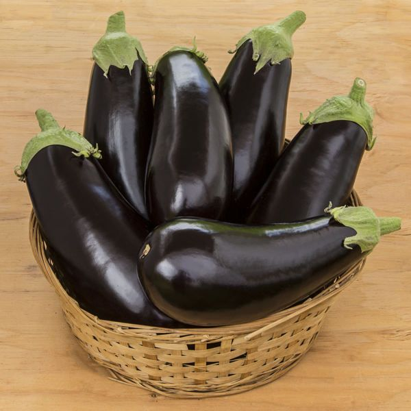 Michael/माइकल Parthenocarpic Eggplant (Genesis Seeds, Isreal)  - No Cash on Delivery - Farmers Stop
