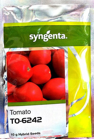 To 6242 Hybrid F1 Tomato Seeds (Syngenta) - Farmers Stop
