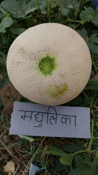 Madhulika/मधुलिका Muskmelon (Nunhems) - Farmers Stop